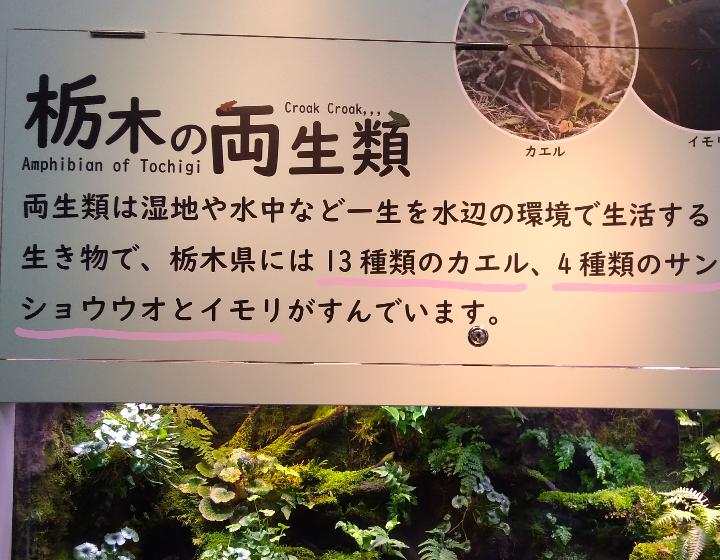 栃木県の両生類の展示